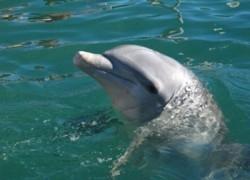 Delfin proboden harpunom junak je Jadrana!