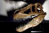 Pronađene kosti najvećeg predatora u Europi