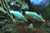 Ribice i kemijska kamuflaža