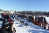 Tradicionalna utrka psećim saonicama na Aljasci