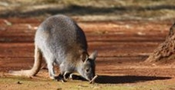 najbolje australsko mjesto za upoznavanje 2013