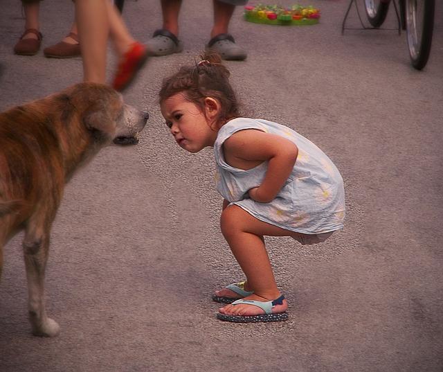 Razmišljate o udomljavanju psa, a vaše ga se dijete panično boji
