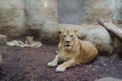 maleni-lavici_zg zoo